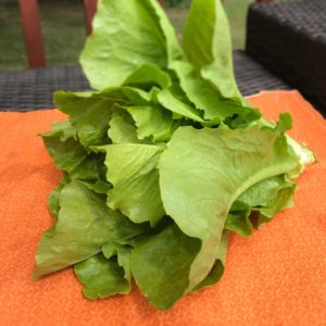 large head of romaine lettuce